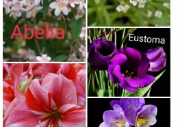 flower names for girls which are uncommon